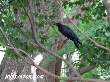 Corbeau Tokyo