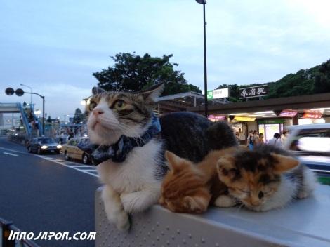 Les chatons c'est mignon