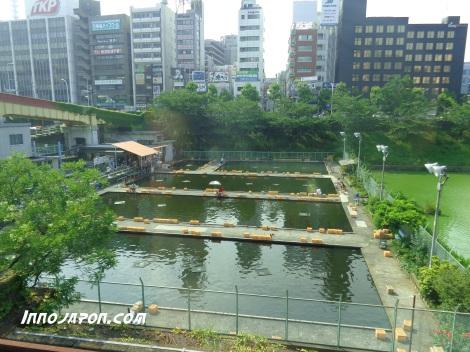 Pisciculture Akihabara