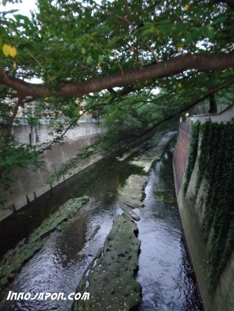 Rivière 5
