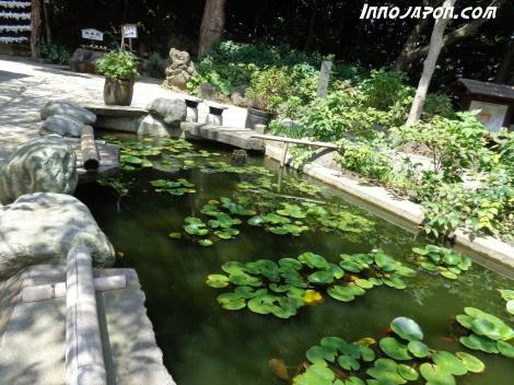 Un petit bassin avec des poissons rouges