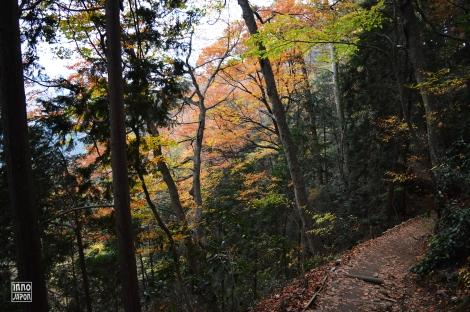 Une photo du chemin numéro 4 - Mont Takao